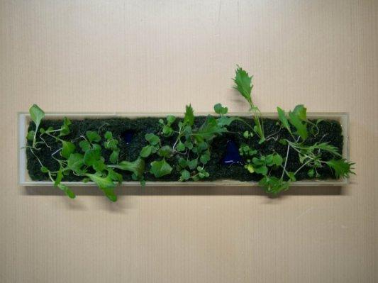 日本科学家开发3D打印园艺盆景技术