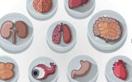 2017疾病特异性模型研究及应用研讨会