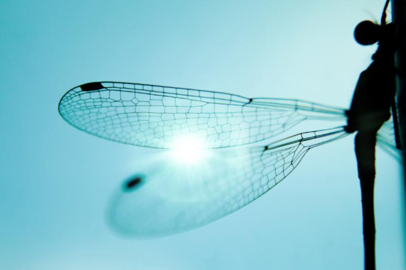 可持续复合纤维3D打印技术进军英国市场