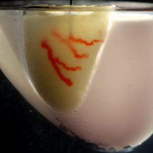 哈佛大学开发新型墨水写入技术生物3D打印大型血管化人体器官