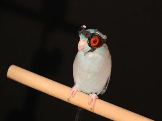 一周最萌:戴着3D打印护目镜的鹦鹉你见过吗?